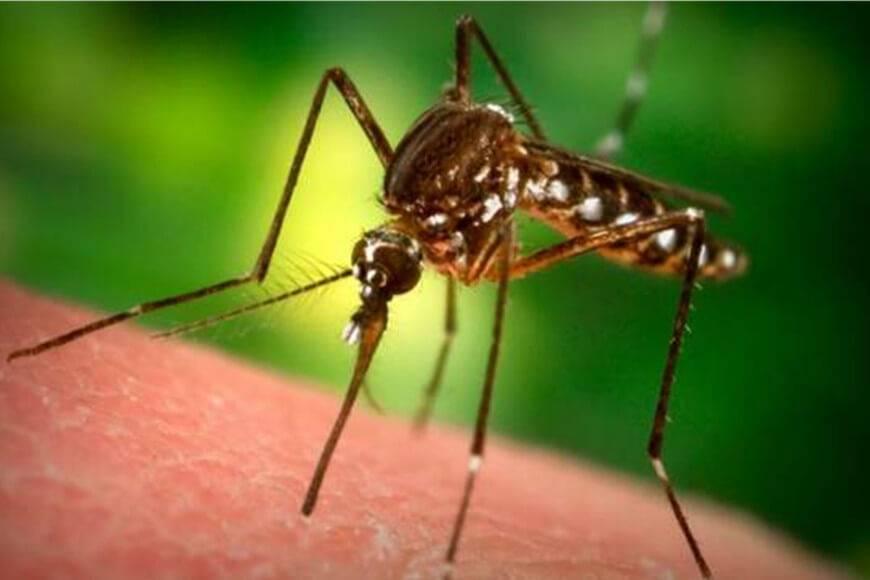 Porque pican los mosquitos