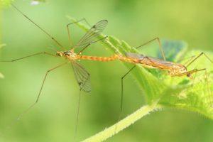 Plantas naturales antimosquitos