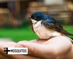 Depredador natural del mosquito
