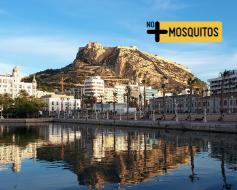 Mosquitos en Alicante